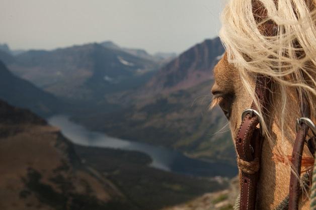 https://i0.wp.com/nomadesdigitais.com/wp-content/uploads/2015/12/cavalos-3.jpg