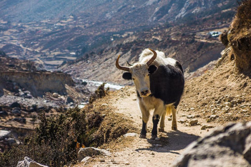 https://i0.wp.com/nomadesdigitais.com/wp-content/uploads/2016/01/Nepal15.jpg