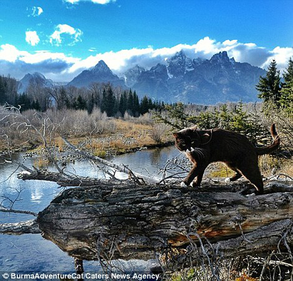 327B8BBD00000578-3504765-Burma_is_pictured_out_for_a_stroll_in_Wyoming_with_peaks_in_the_-a-7_1458818218199