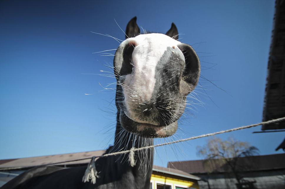 We-Photographed-Funny-Animal-Mug-Shots-All-Over-the-World-573356da4891a__880
