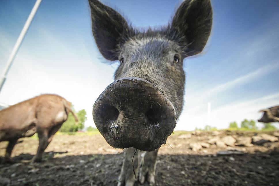 We-Photographed-Funny-Animal-Mug-Shots-All-Over-the-World-5733571b8ca71__880