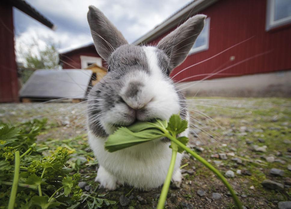We-Photographed-Funny-Animal-Mug-Shots-All-Over-the-World-57335742b2e83__880