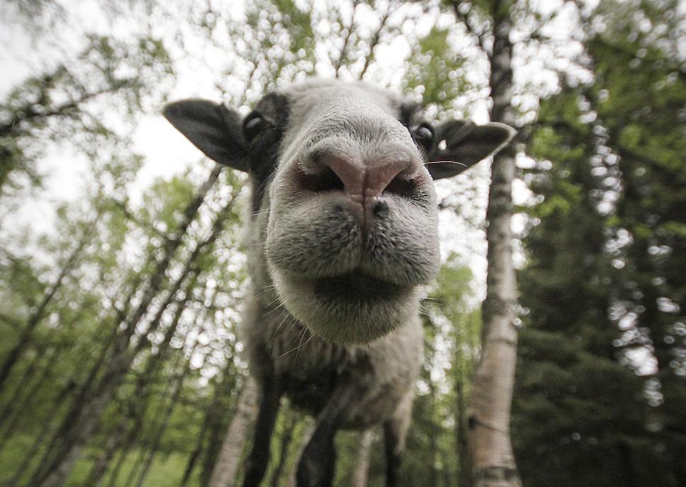 We-Photographed-Funny-Animal-Mug-Shots-All-Over-the-World-5733575d27040__880