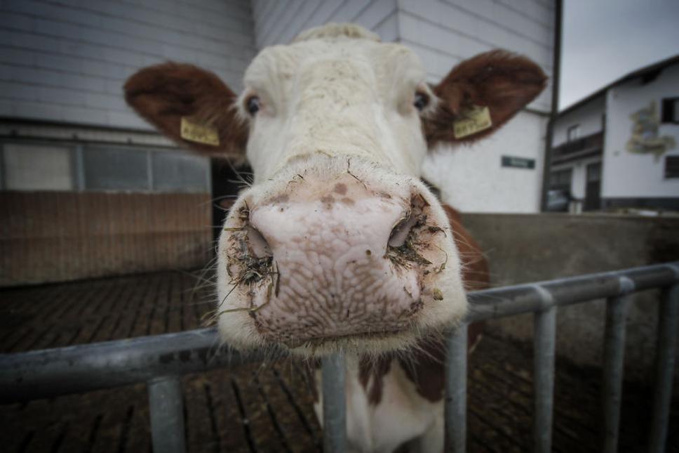 We-Photographed-Funny-Animal-Mug-Shots-All-Over-the-World-573357a6c9118__880