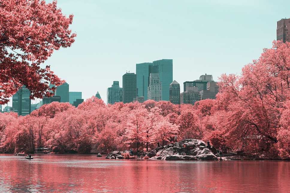 12_Central-Park-Infrared