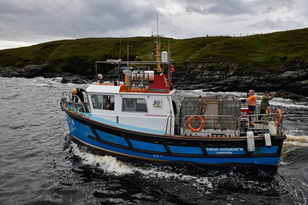 FOULA, SCOTLAND - OCTOBER 01: The New Advance ferry manned by residents leaves the harbour on the Island of Foula to take the Grear family ponies to a sale on Shetland on October 1, 2016 in Foula, Scotland. Foula is the remotest inhabited island in Great Britain with a current population of thirty people and has been owned since the turn of the 20th century by the Holbourn family. (Photo by Jeff J Mitchell/Getty Images)