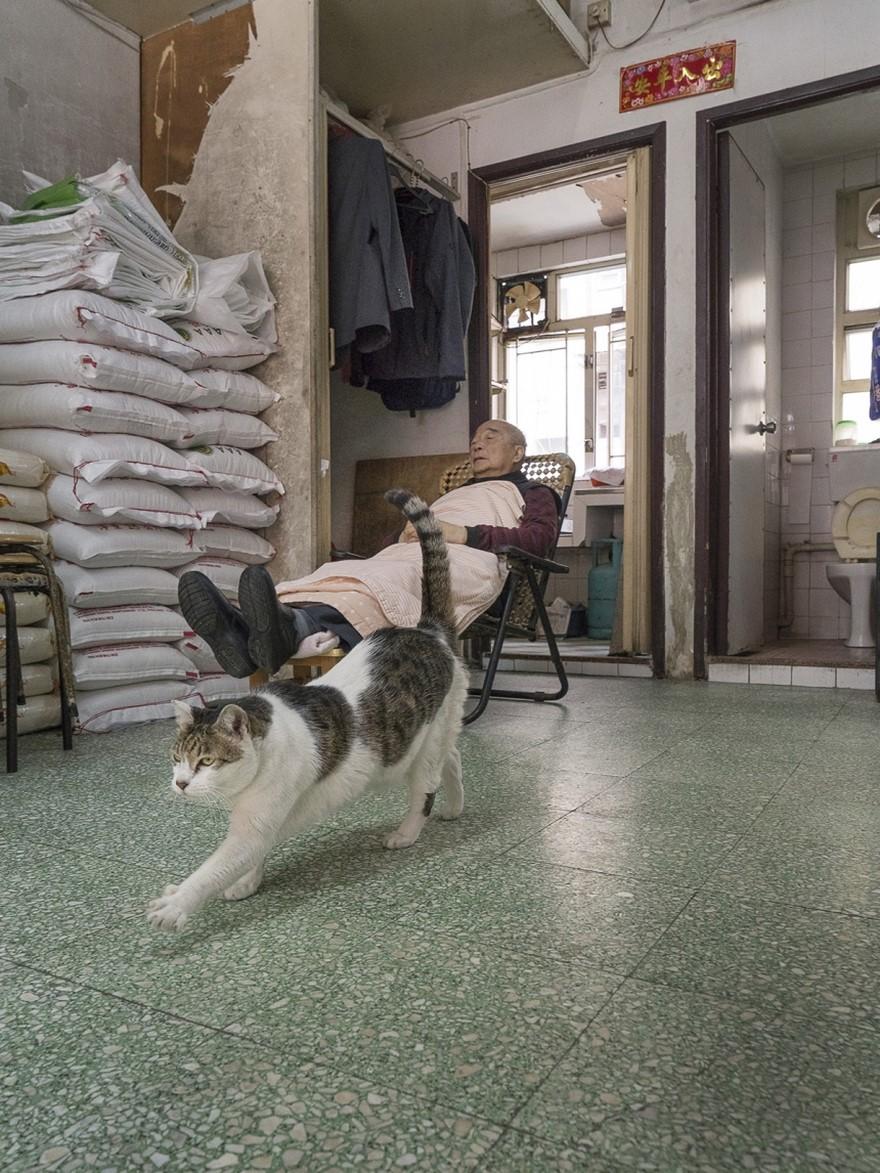 marcel-heijnen-cats-1