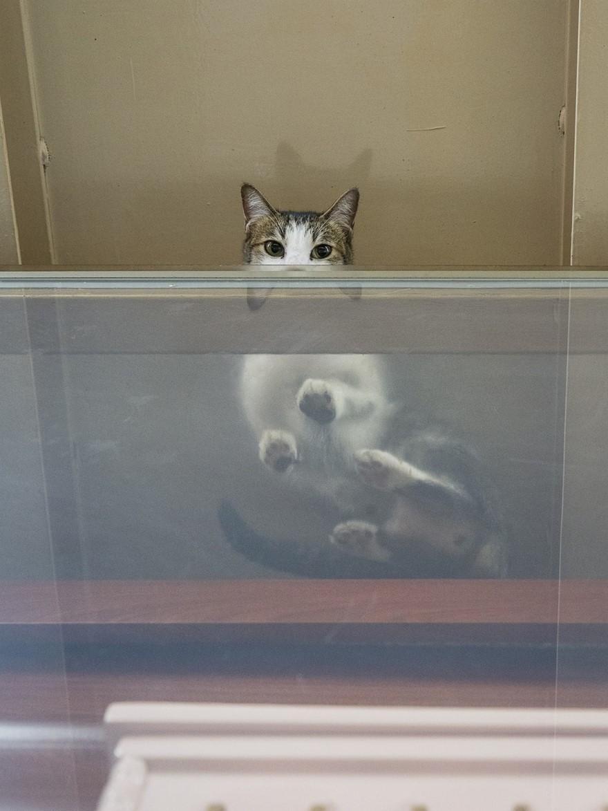 marcel-heijnen-cats-15