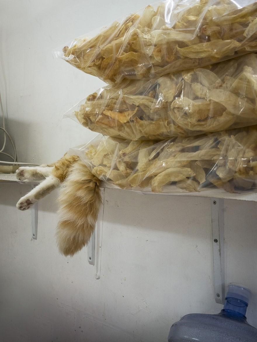 marcel-heijnen-cats-17