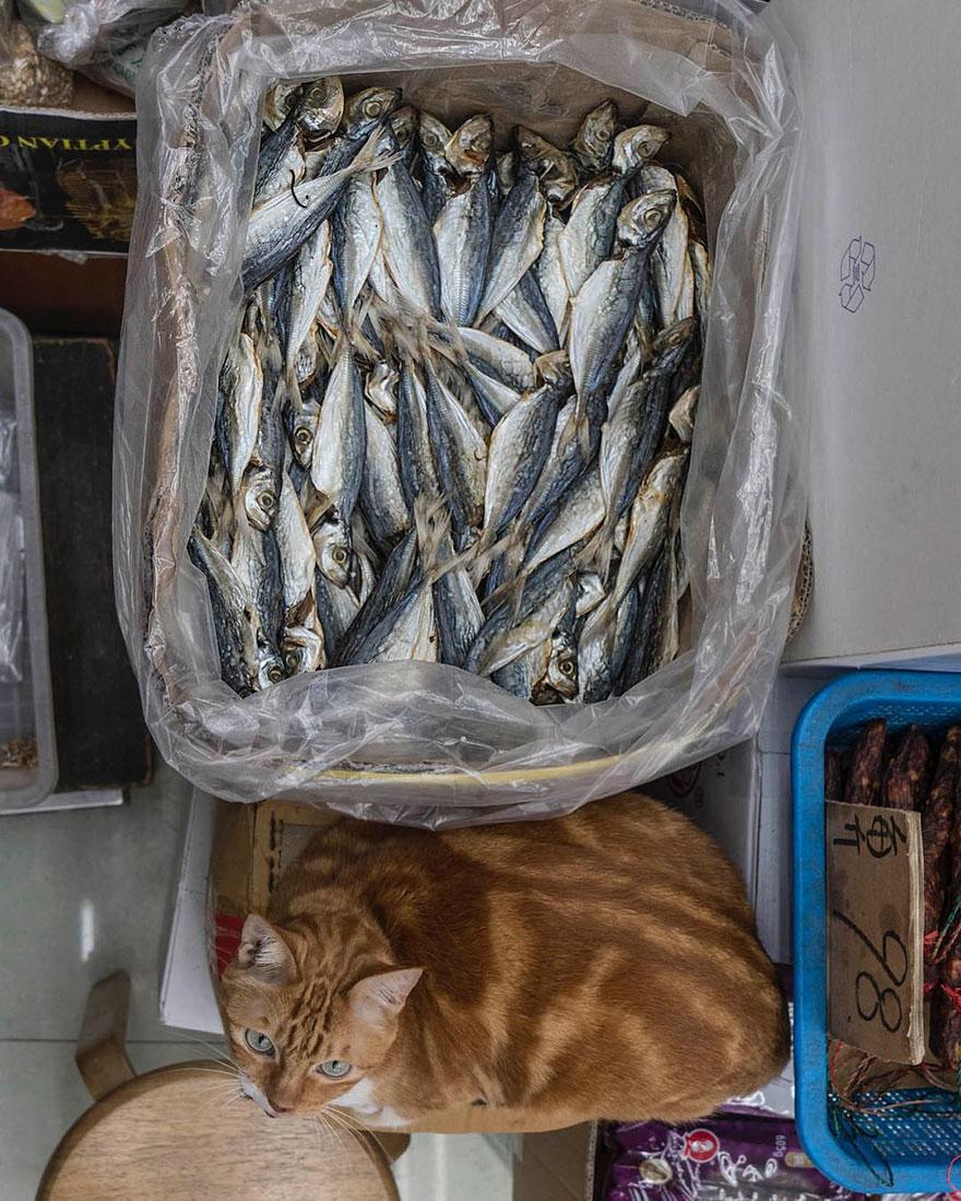 marcel-heijnen-cats-19