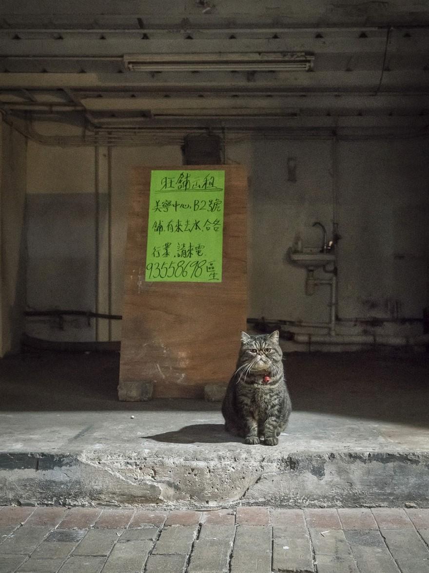 marcel-heijnen-cats-6