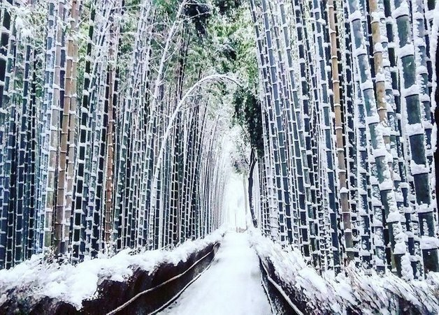 heavy-snowfall-kyoto-japan-2017-21-587dcc6226a2b__700