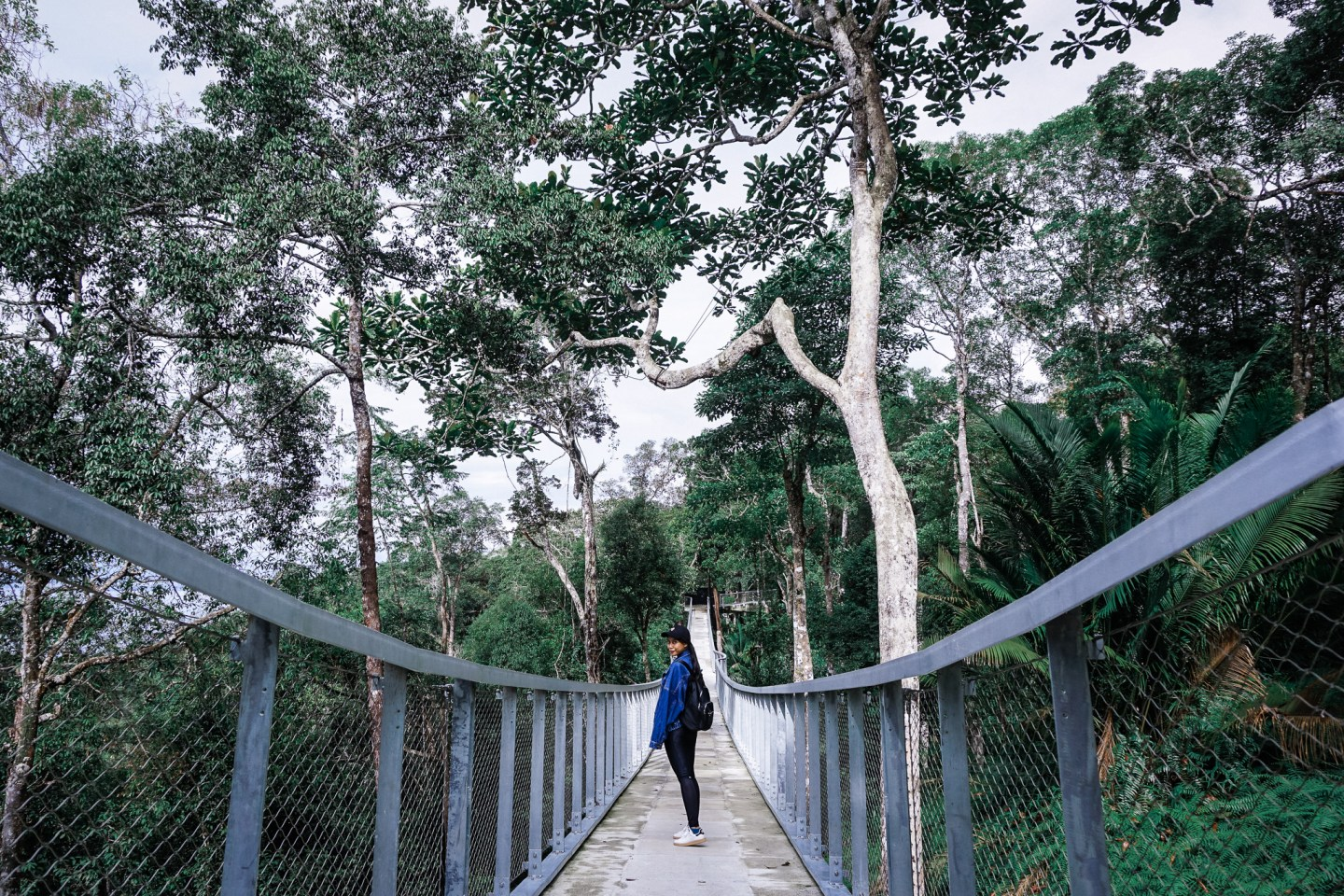 Visiting Penang's Eco Attraction: The Habitat