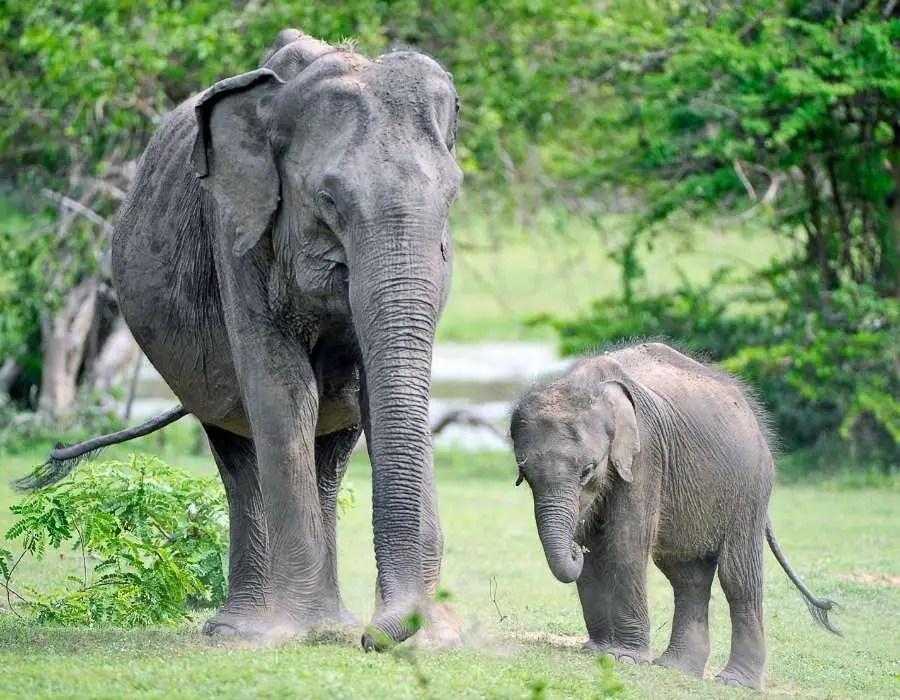 7 Things I Love About Sri Lanka - Yala national park Sri Lanka
