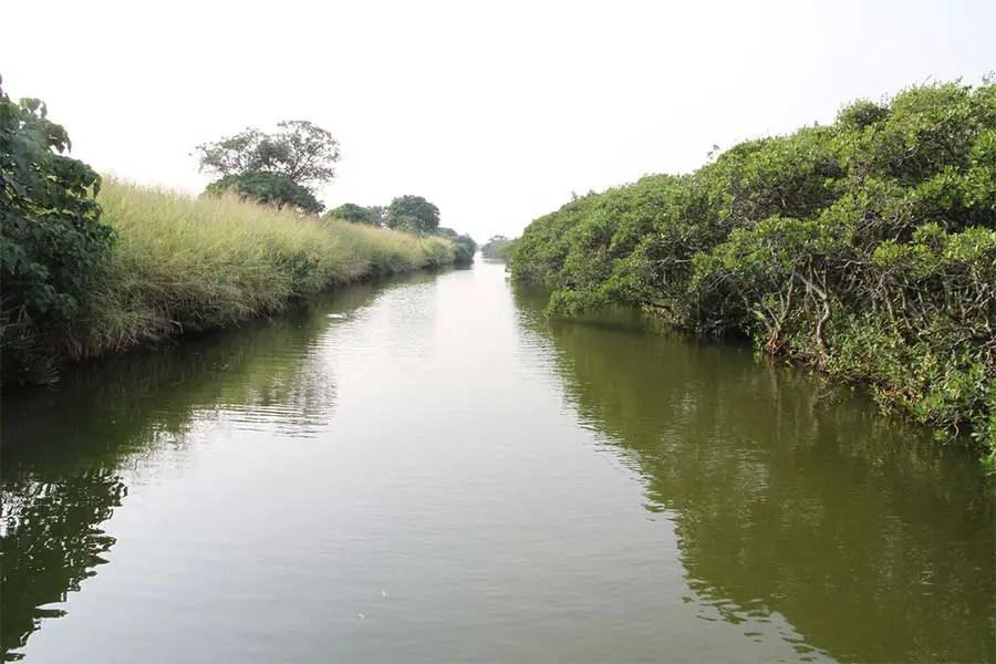 Tamsui river mangrove