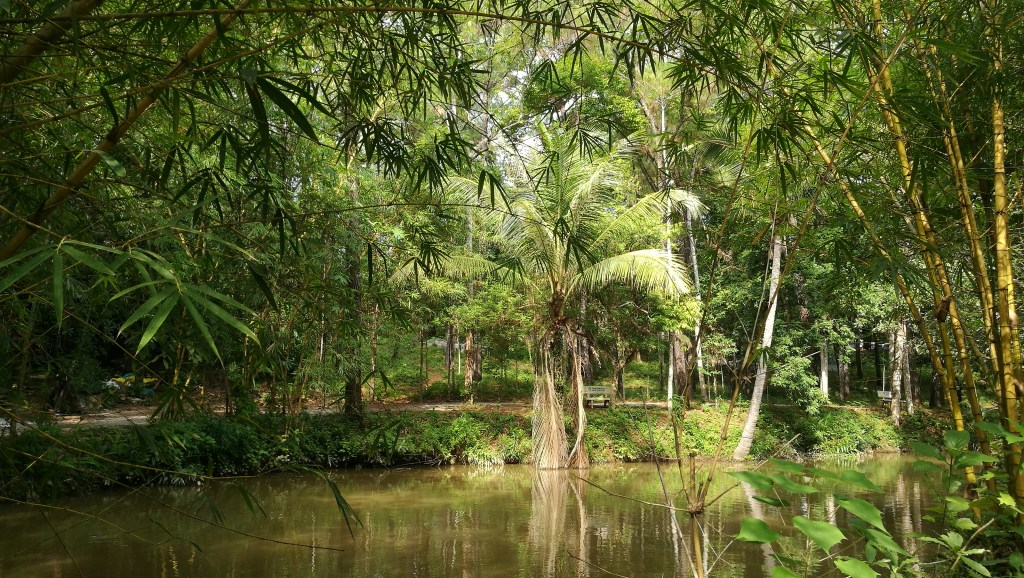 Bamboo shoots and palm trees overlooking the lake of catfish at Plum Village Vietnam