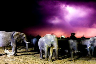 141, Day 246, Elephant Sands, Botswana