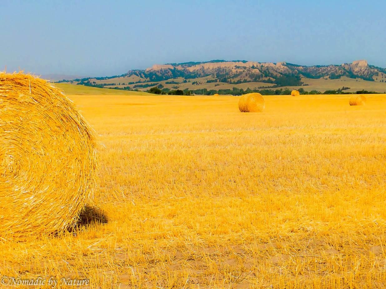Nebraska Wheat Fields