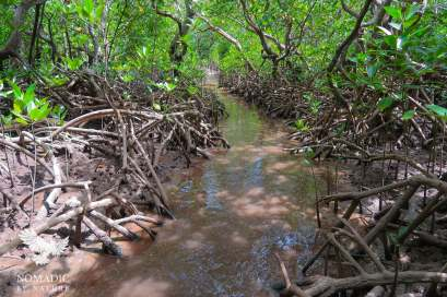 Path through the Mangrove Forest from Quirimbas Island to Ibo Island, Mozambique