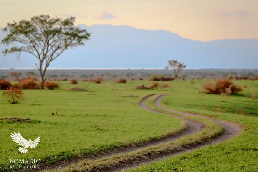 Ishasha, Queen Elizabeth National Park, Uganda