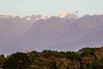 The Rwenzori Mountains above The Bigodi Wetlands