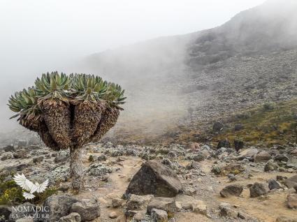 The Misty Barranco Valley, Mount Kilimanjaro, Tanzania