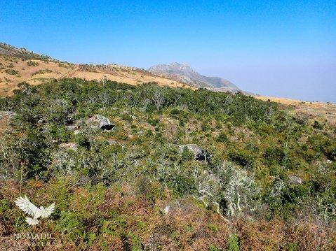 Forested Gully, Trekking Mount Mulanje, Malawi