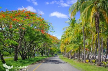 The Malinche Lined Road of Playa Carrillo, Costa Rica