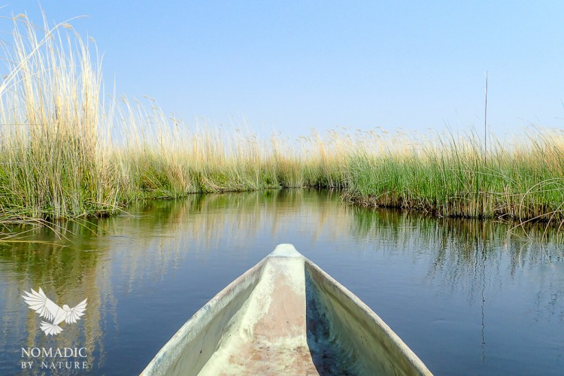 A Mokoro Ride through the Reeds, Okavango Delta, Botswana