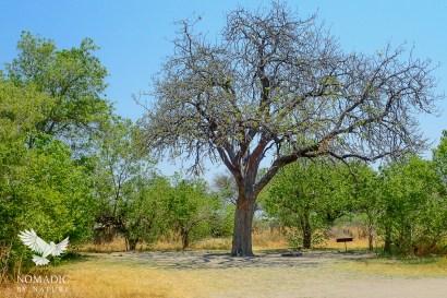Third Bridge Campsite, Moremi Game Reserve, Botswana