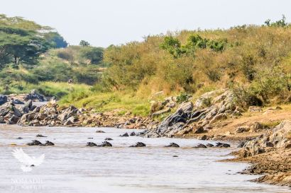 Wildebeest Crossing the Sand River, Serengeti National Park, Tanzania