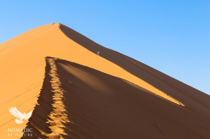 Climbing the Crest of Big Daddy Dune, Sossusvlei, Namibia