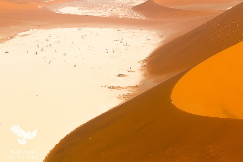Looking Down at Dead Vlei from Big Daddy, Sossusvlei, Namibia