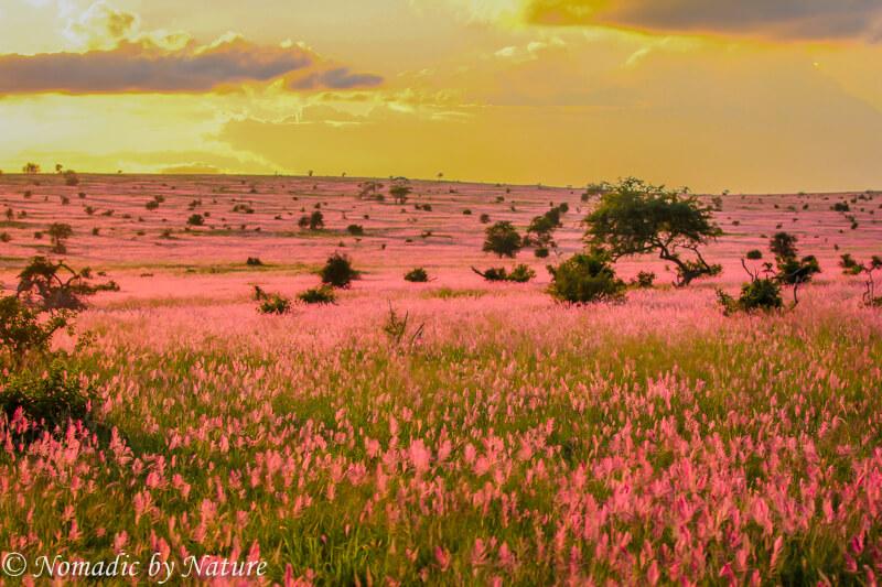 Lavender Pink Sunset, Taita Hills