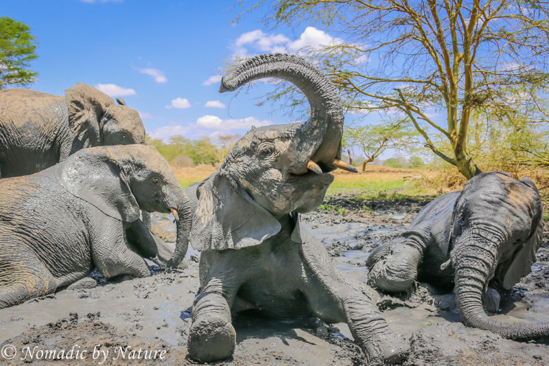 A Trunk Salute to the Mud Gods, Umani Springs