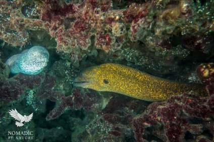 Two Moray Eels, Bazaruto Island, Vilanculos, Mozambique