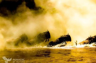 Wildebeest Leap from the Dust Like Ghosts of Crossings Past