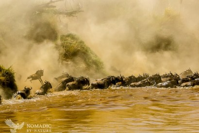 Wildebeest Fall Like Raindrops into the Mara River