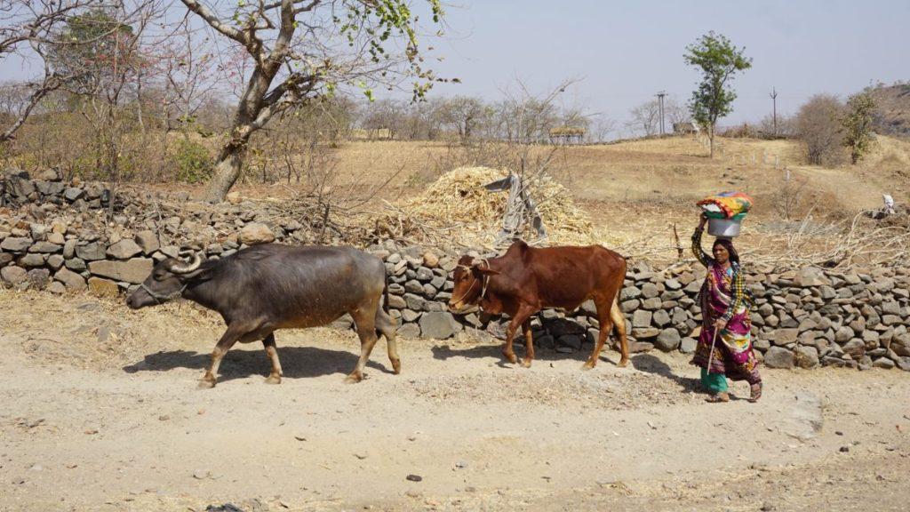 mandu india local life