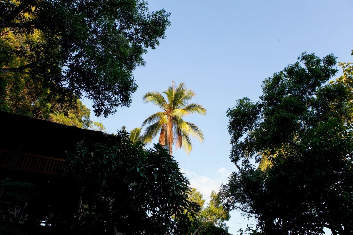 sepanggar island palm tree