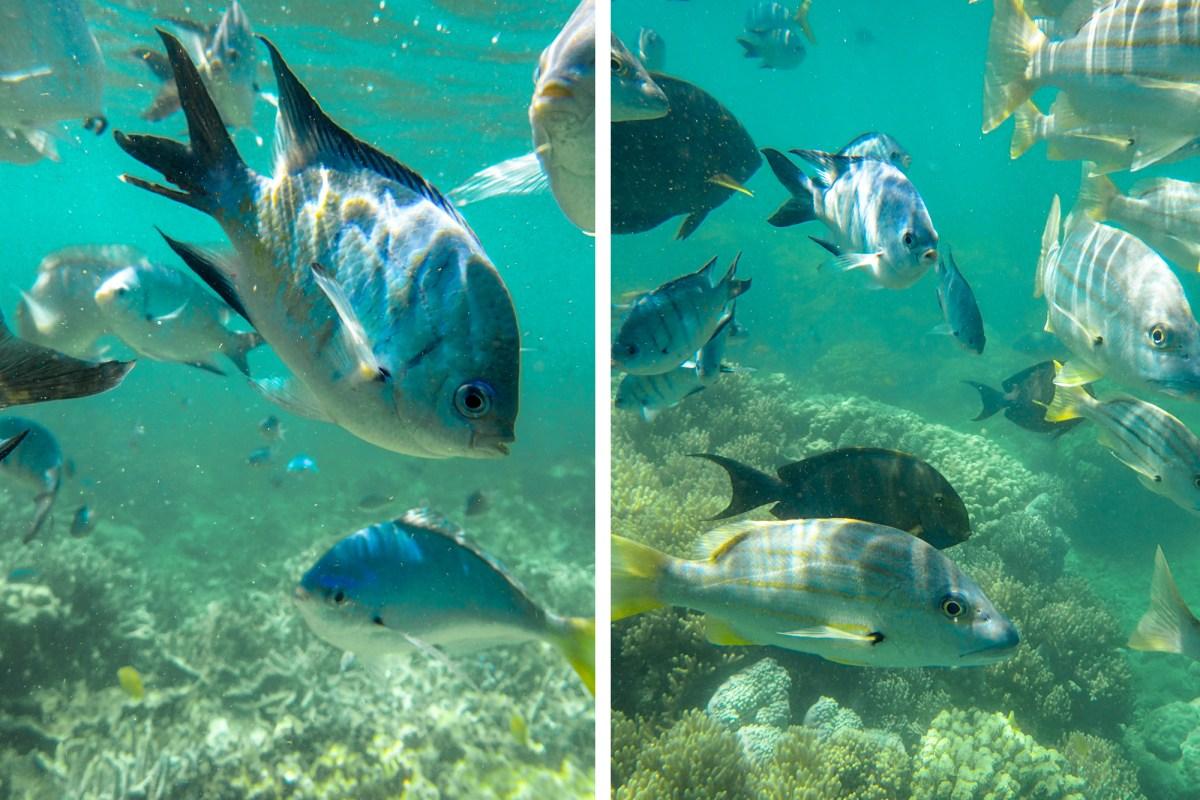 Snorkeling in Blue Pearl Bay
