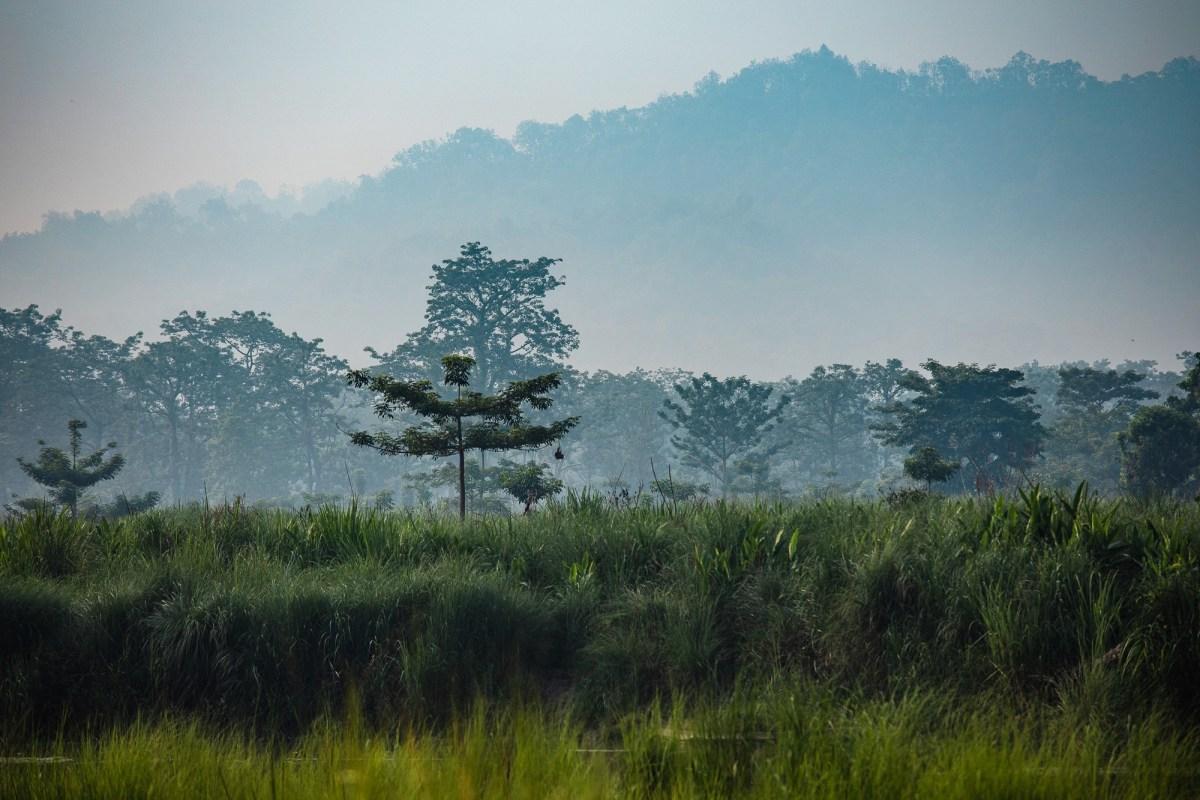 Morning jungle views at Barahi Jungle Lodge