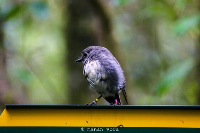 Wildlife, Stuart Island