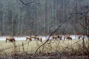 The closest I could get to the elk with my 24-70mm lens