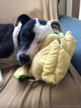 Once we got back home, Tisen immediately went back to sleep