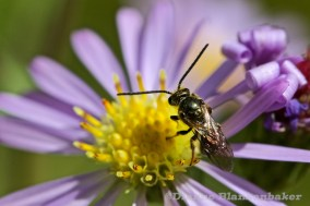 Mysterious Pollinator