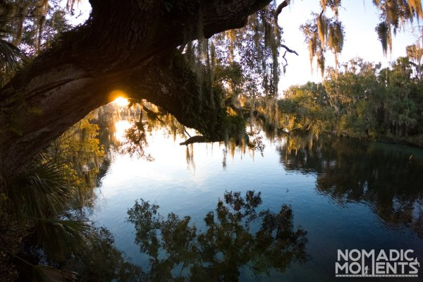 Blue Springs State Park is the best place to find manatees