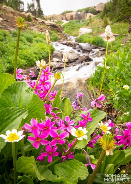 Flowers of Lion Lake Area