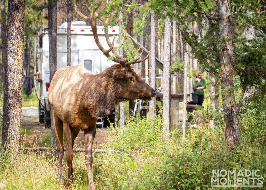 Wapiti Campground - Canadian Rockies Campgrounds