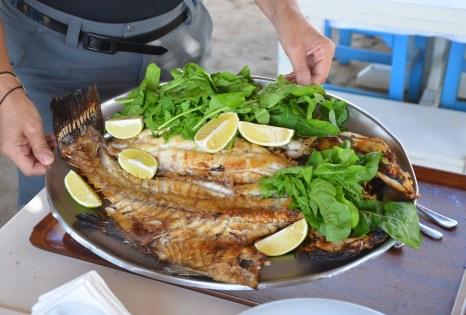 Lagos fish (after) at Aquarium Restaurant in Gümüşlük, Turkey